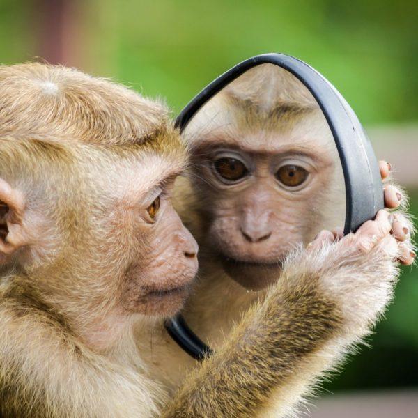 coaching miroir